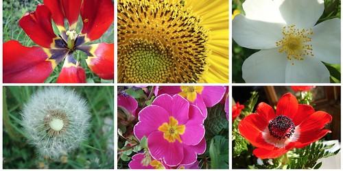 Nearer, flowers