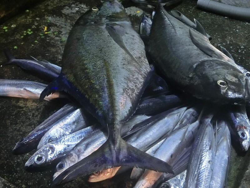 17度C環島-蘭嶼飛魚季體驗- (40)