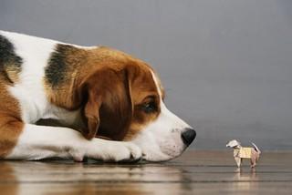 beagle-street-dog-face-off