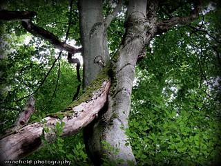 Bäume verbinden sich. / Trees connect.
