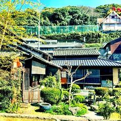 #temple garden #green #Nagasaki