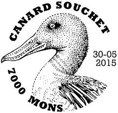 11bis Canard souchet Mons