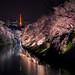 Night Sakura by miichan