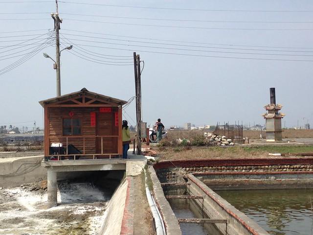 觀樹一解地層下陷的難題,在雲林口湖成龍村,租廢棄魚塭實驗海水養殖。
