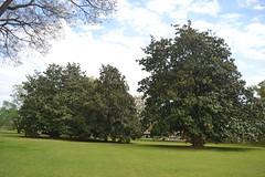 005 Crump Park