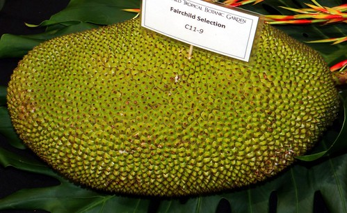 Jackfruit #26: FAIRCHILD  C11-9