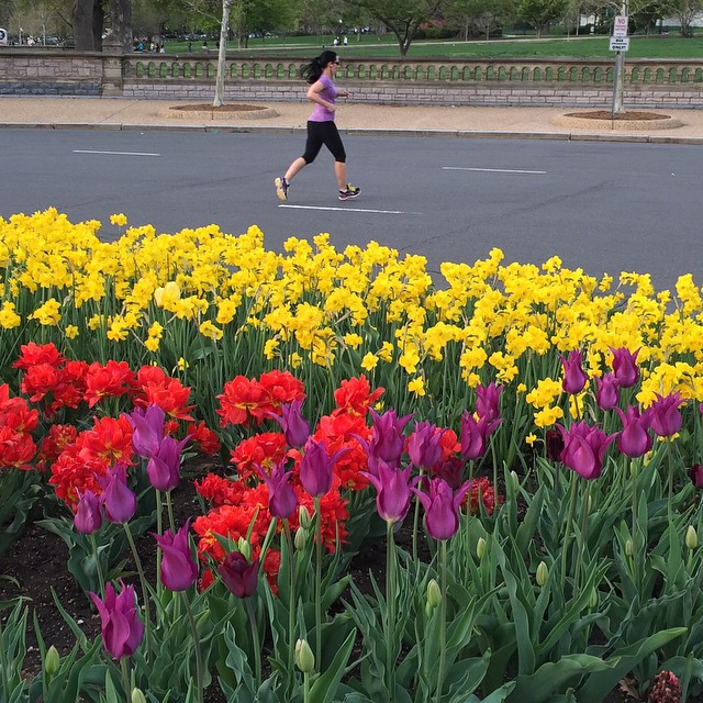 Running by the tulips #rundc #IGDC #spring #dc