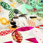 Bernina_Katzen_01_612_coated300