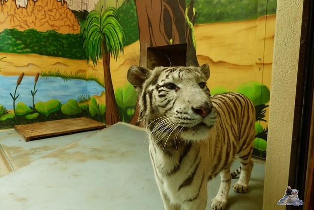 Zoo Bratislava 18.04.2015 191