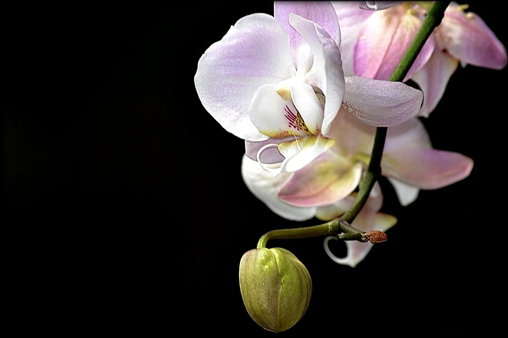 Fleurs, Plantes © Ana Luthi Tous droits réservés 10000
