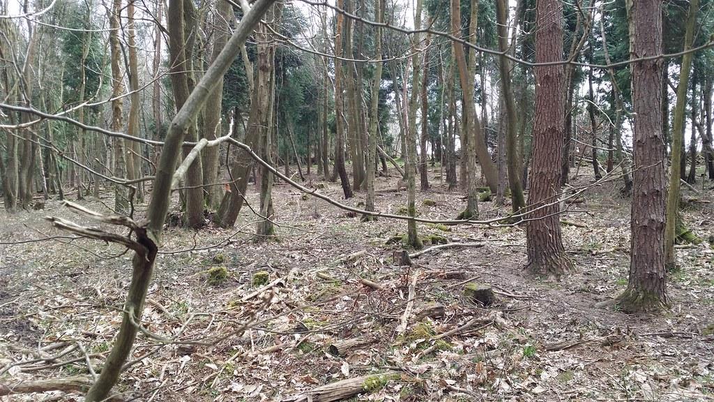 Furnace Wood #Wealdway #sh