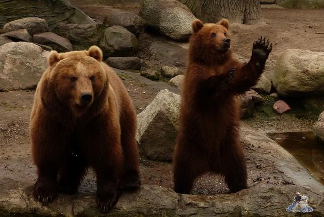 Tierpark Hagenbeck 14.03.2015  59