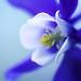 Blue Spring by j man.