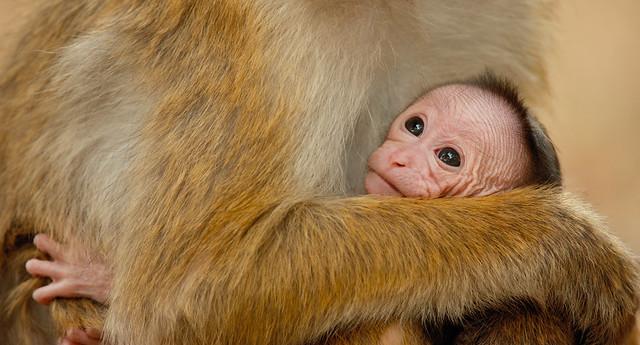 monkeykingdom547fa84e5b6d9