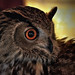 The look of... Bubo bubo by Abariltur