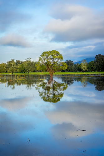 On Reflection - Flooded Pastures