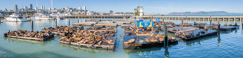 Sea lions at Pier 39 | by kaifr