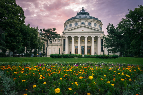 culture morning romania bucharest flowers flori cloudy rasarit ateneulroman romanian green sunrise atheneum city architecture