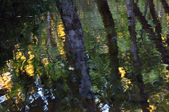 Reflections in the Stream, Hagg Lake