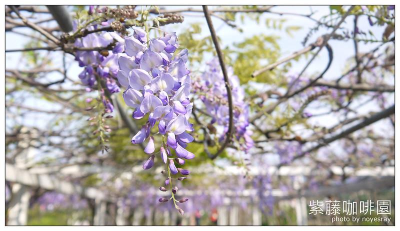 紫藤咖啡園 10