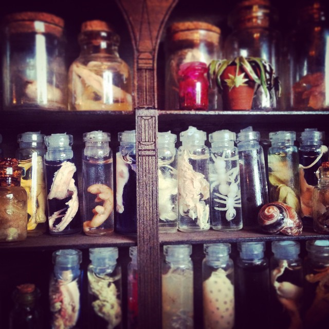 Professor Lynkhart's Cabinet of Curiosities - final project at college.
