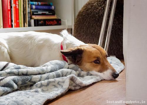 Fri, Mar 27th, 2015 Found Female Dog - Liffey Valley Shopping Centre, Clondalkin, Dublin