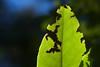Leaf Munched