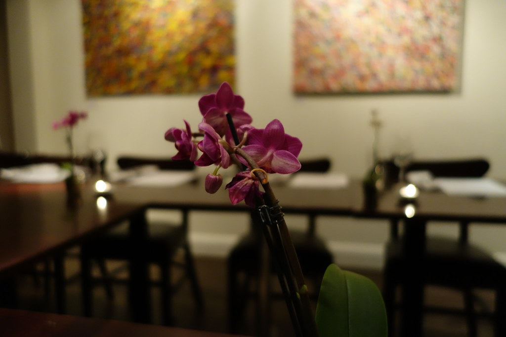 Orchid, Pure Taste, Westbourne Grove