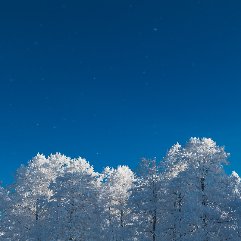 картинка шатура зимний вечер красивый молочным