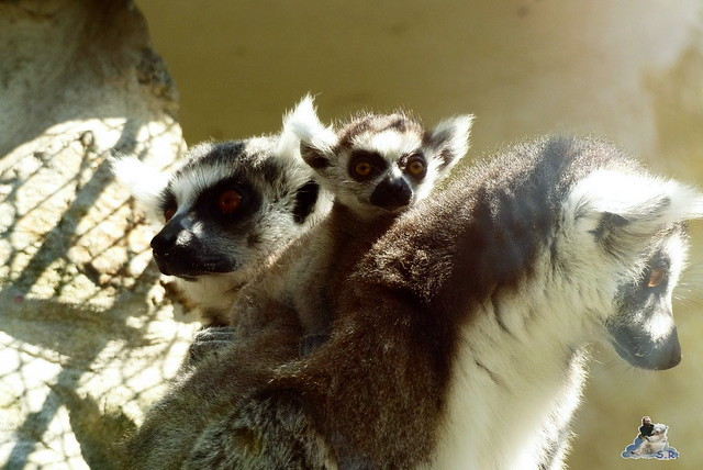 Zoo Bratislava 18.04.2015 204