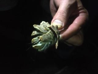 Hermit Crab, Playa Pelada, Costa Rica