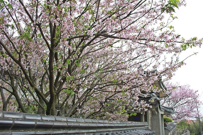 17度C在地景點春季推薦-東方室-櫻花 (5)