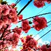 Spring in Jersey by SurFeRGiRL30