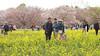 Photo:IMG_1057 国営昭和記念公園 花畑 By vicjuan