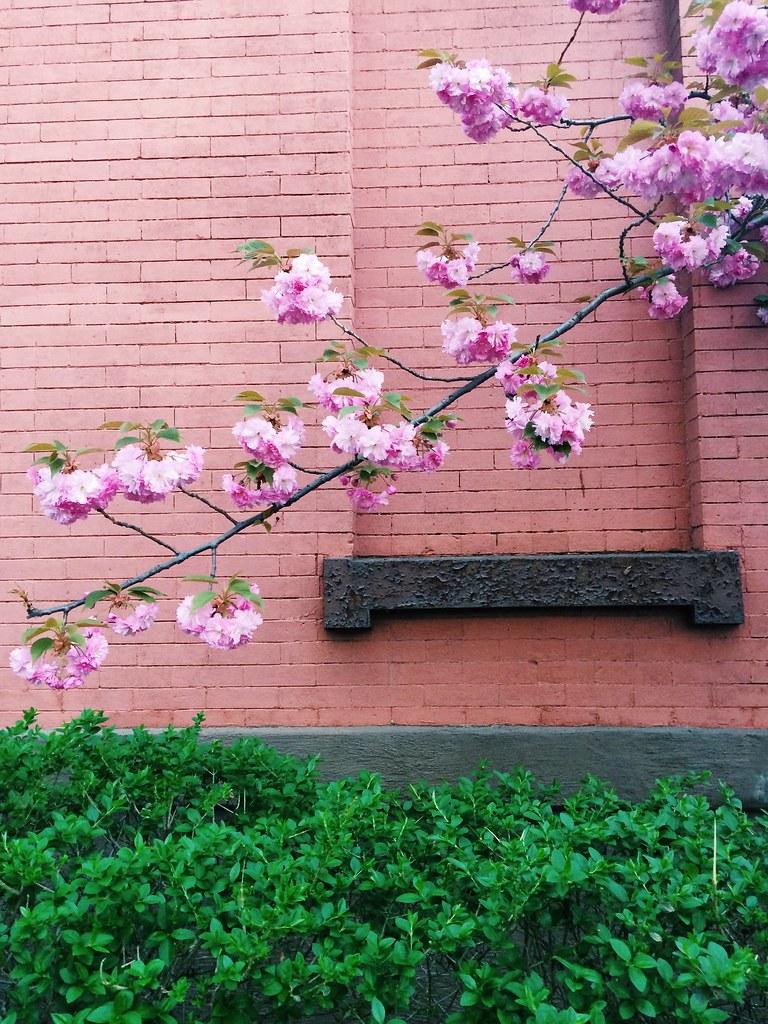 Brooklyn in Bloom