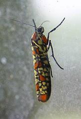 Very Cool Bug