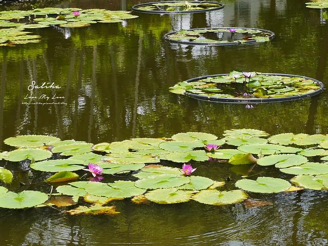 台北一日遊景點推薦植物園荷花蓮花池 (42)