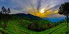 Sunrise In The Blue Mountains (Coonoor)