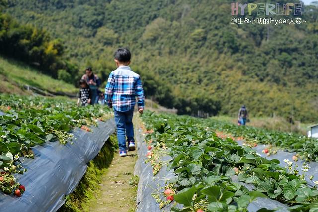 苗栗劉正男高冷草莓園  (6)