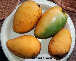 Mango  #281: EDWARD  X  EARLE  #2