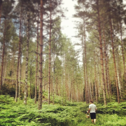 Instagrammed Berry Picking in a Forest