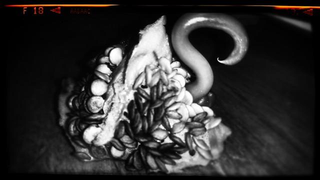 Swan of Cthulhu