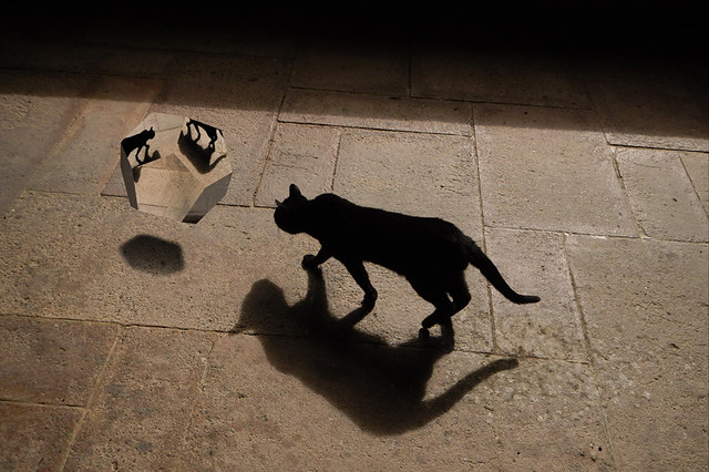 Little Black Cat and Shadow