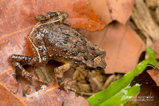 Frog - DSC_5380