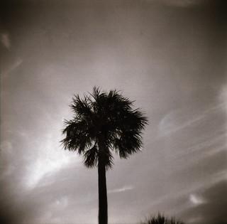 South Beach Palm