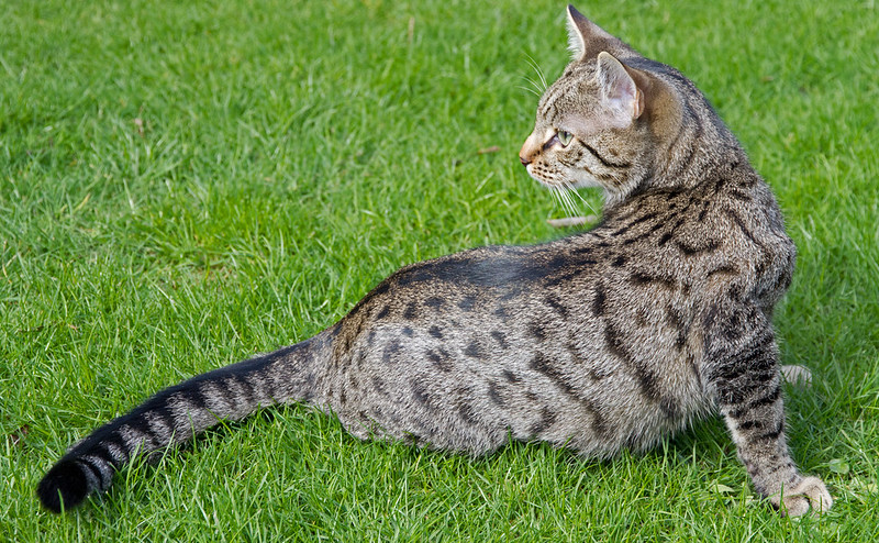 Gabriel on the grass