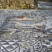 Volubilis: House of Venus, eponymous mosaic, 10
