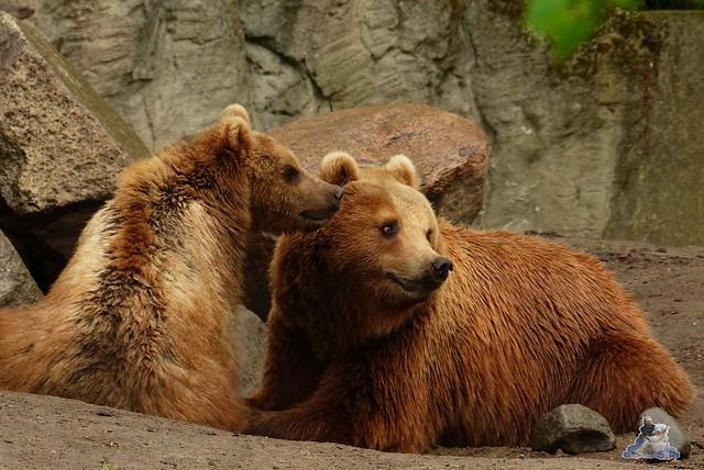 Tierpark Hagenbeck 25.04.2015   172