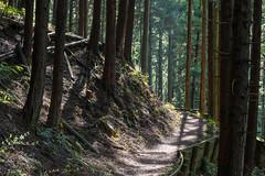 スギ・ヒノキ樹林帯の登山道