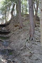 Huge Roots